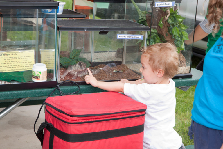 A very young boy patient touching the glass terrarium with a Savanna Monitor Lizard